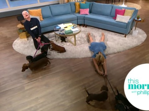 Holly Willoughby left flat out after being dragged across studio floor by sausage dogs