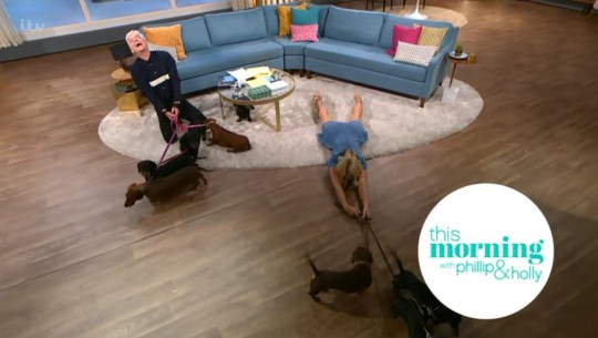 Holly Willoughby on This Morning with sausage dogs
