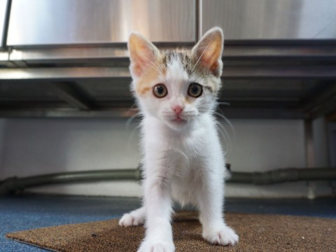 Wobbly kitten who can't keep her balance is looking for a loving home