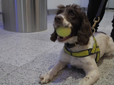 Dogs With Jobs: Meet the dog unit keeping you safe when you travel