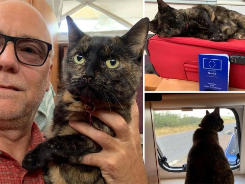 A cute cat managed to travel all the way to France without her owners knowing