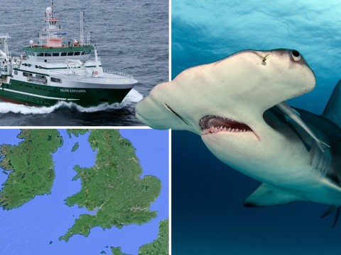 Hammerhead shark spotted off British waters for first time in history