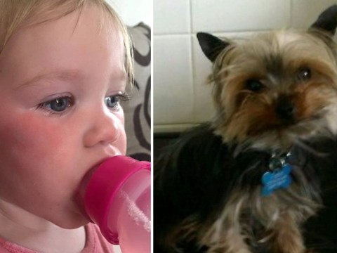 Seagulls kill dog then return to attack toddler two weeks later