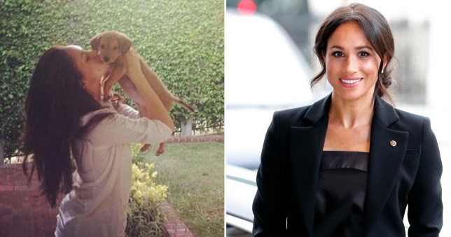 Meghan Markle with a dog and Meghan Markle