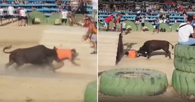 bull fight Spain