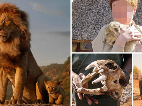 Cute lion photos are fuelling trophy hunting trade