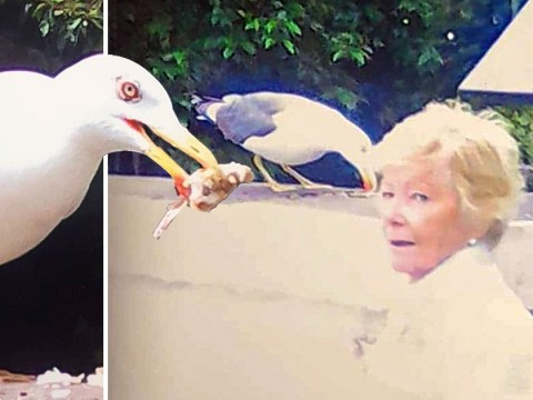 Woman's friendship with seagull that keeps coming back after she helped it