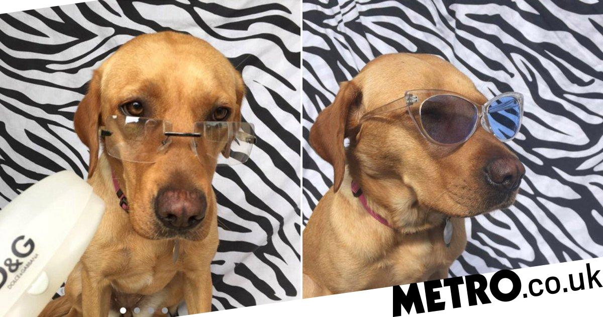 Woman selling glasses on Depop models them on her dog