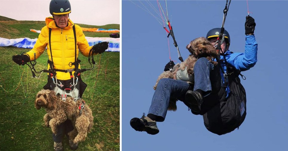Cockapoo Henry paraglides over to the Alps every year (Picture: Wales News Service)