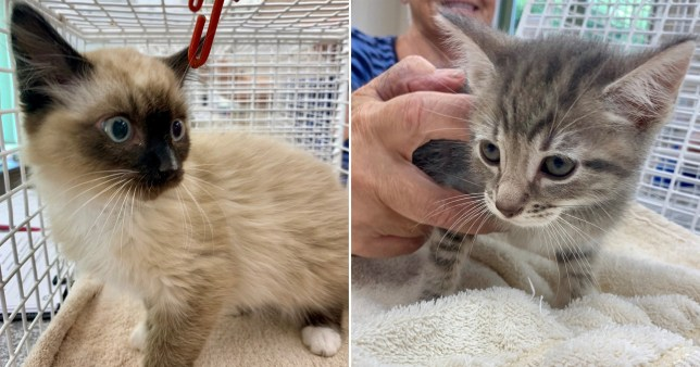 Two tiny kittens 'stolen' from cat rescue shelter