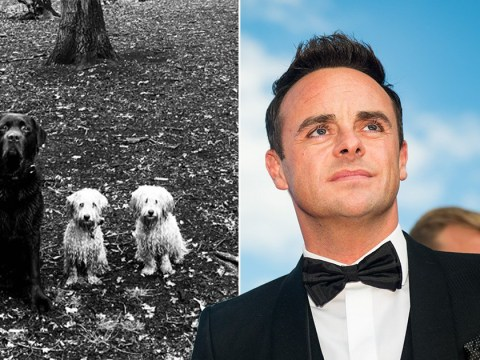 Ant McPartlin returns to Twitter after two month hiatus just to tweet about his dogs