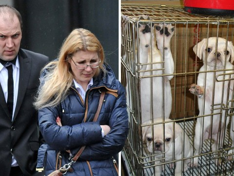 Woman jailed for keeping puppies in dirty cages caught in Spain