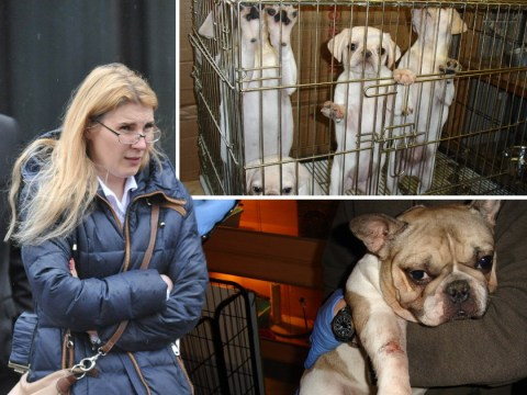 Puppy smuggler who fled to Spain to avoid prison finally faces justice