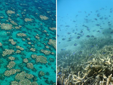 Future of Great Barrier Reef has never been bleaker after new downgrade