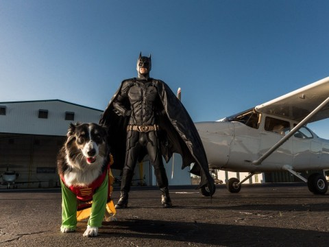 Pilot dresses up as Batman to fly rescue animals to their new homes