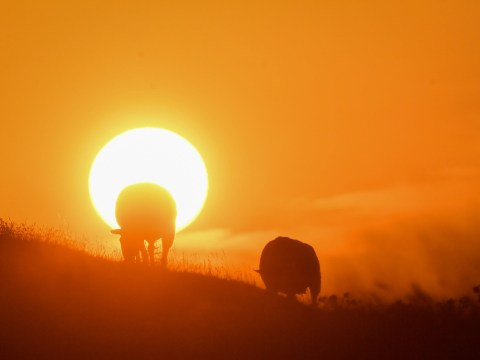July was hottest month in history fuelled by record-breaking heatwaves