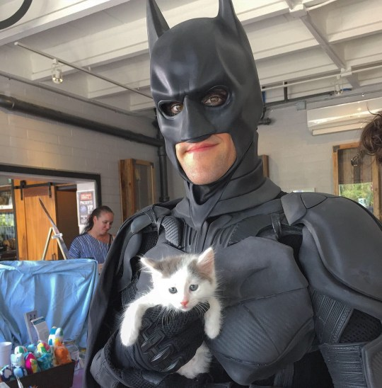 Batman and the kitten he rescued