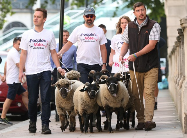 A flock of sheep are herded past government buildings in Whitehall, London, by Farmers for a People's Vote. PRESS ASSOCIATION Photo. Picture date: Thursday August 15, 2019. See PA story POLITICS Brexit. Photo credit should read: Yui Mok/PA Wire