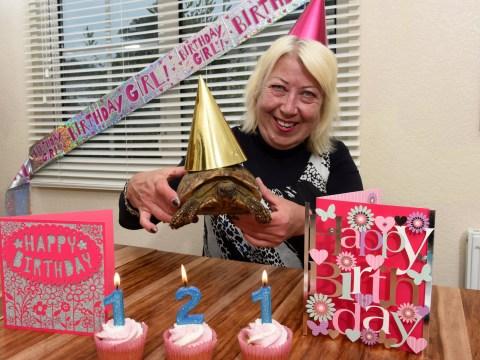 World's oldest living pet Tommy the tortoise celebrates 121st birthday