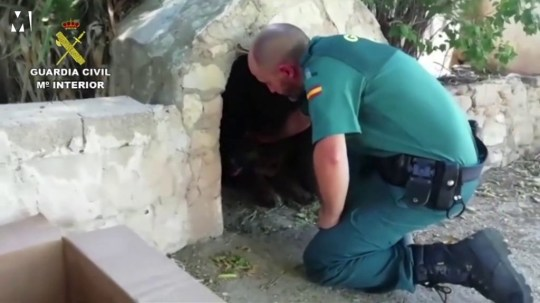 Slug: Spain Rescue Puppies Arrival Date: Aug 20, 2019 1:17PM (GMT 12:17) Creation Date: Aug 20, 2019 1:17PM (GMT 12:17) Duration: 00:23 Video ID: 4225776 Type: VOSOT Usage: Newsroom Ready Restriction: International: AP Clients Only See Script for additional details. Source: CIVIL GUARD HANDOUT CIVIL GUARD HANDOUT - AP CLIENTS ONLY
