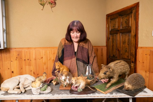 Former teacher Susan Tate, 57, was found to own an illegal taxidermy collection - but only after Crimewatch turned up at her house thinking her toy wolf was a real stuffed animal, picture at her home in Anglesey, Wales.