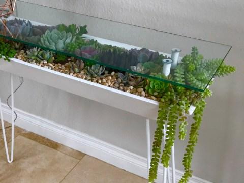 Gorgeous table doubles as a succulent garden