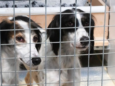 Two 'inseparable lovedogs' are looking for their forever home after months in shelter