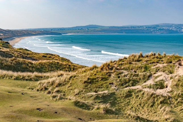 nature reserve sand dunes at gwithian towans, hayle, Cornwall, England, Britain, uk