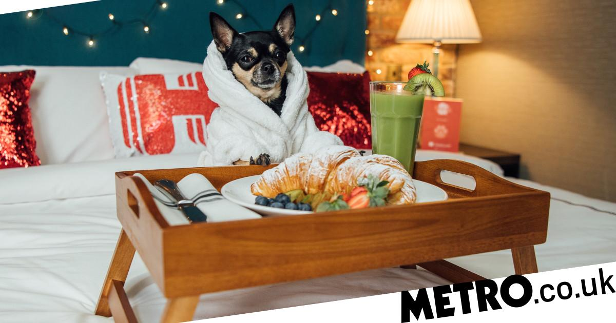 Travel website is searching for dog critic to rate the best pet-friendly hotels