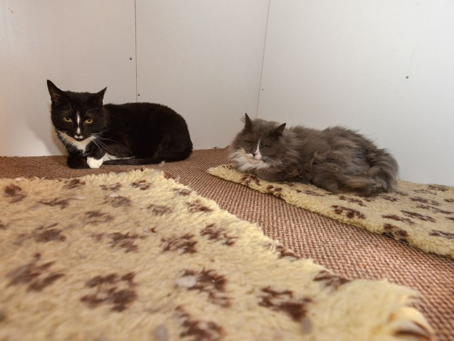 Sweet pair of cats have been looking for a home for two years