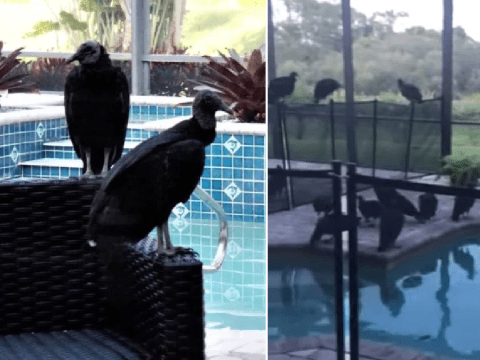 Family can't visit their luxury holiday home after it's overrun with stinking vomiting vultures