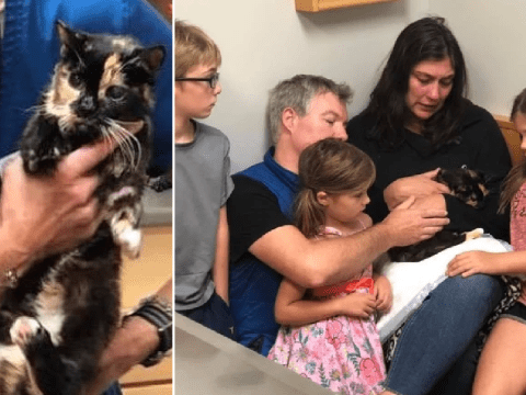 Terminally-ill cat who vanished 10 years ago returns home to die with her family