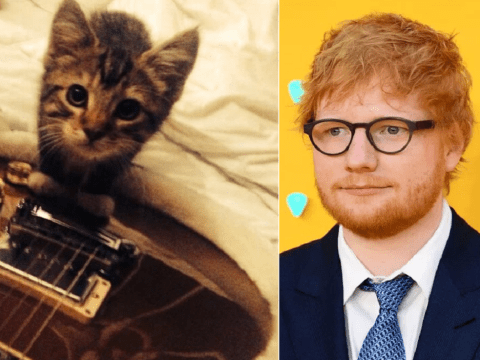 Ed Sheeran left heartbroken as cat Graham dies after being hit by a car