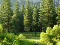 Tall trees in the woods surrounded by greenery