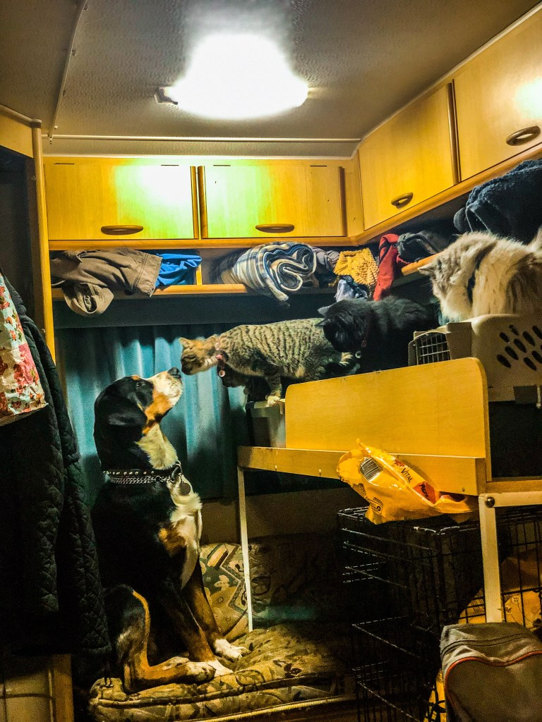 Wasi and cats in the caravan