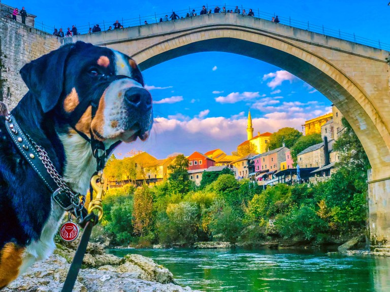 Wasi in Mostar, Bosnia and Herzegovina