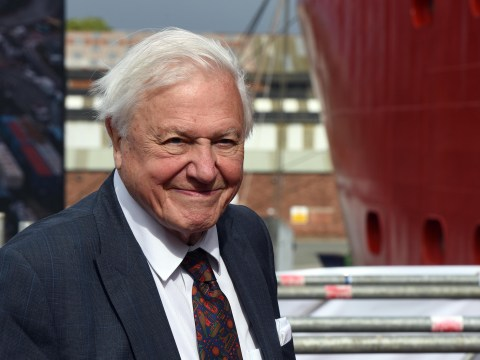 David Attenborough working on new documentary about animals and colour and it sounds amazing