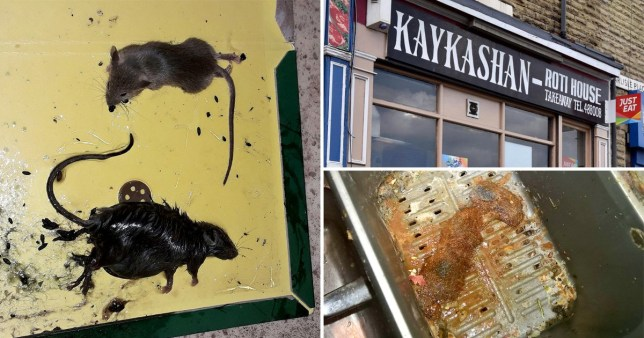 Health inspectors found animal faeces inside boxes that were used to contain food (Picture: SWNS)