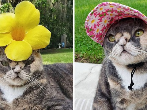 Cat who was at risk of being put down for not being 'pretty' is now an Instagram star