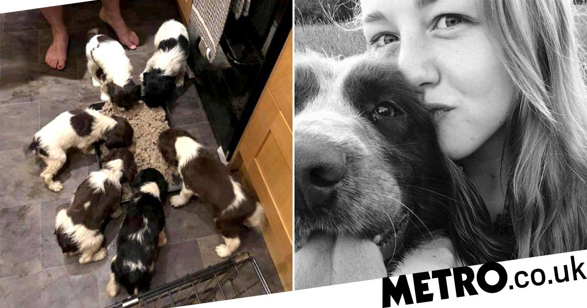 Owner is reunited with six puppies stolen as she slept