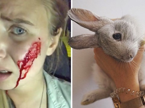 Vegan activist 'killed more than 90 newborn rabbits' during rescue mission