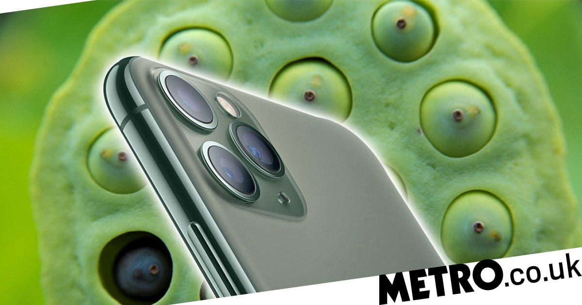 Why Apple S Iphone 11 Pro Triggers Trypophobia Fear Of Small