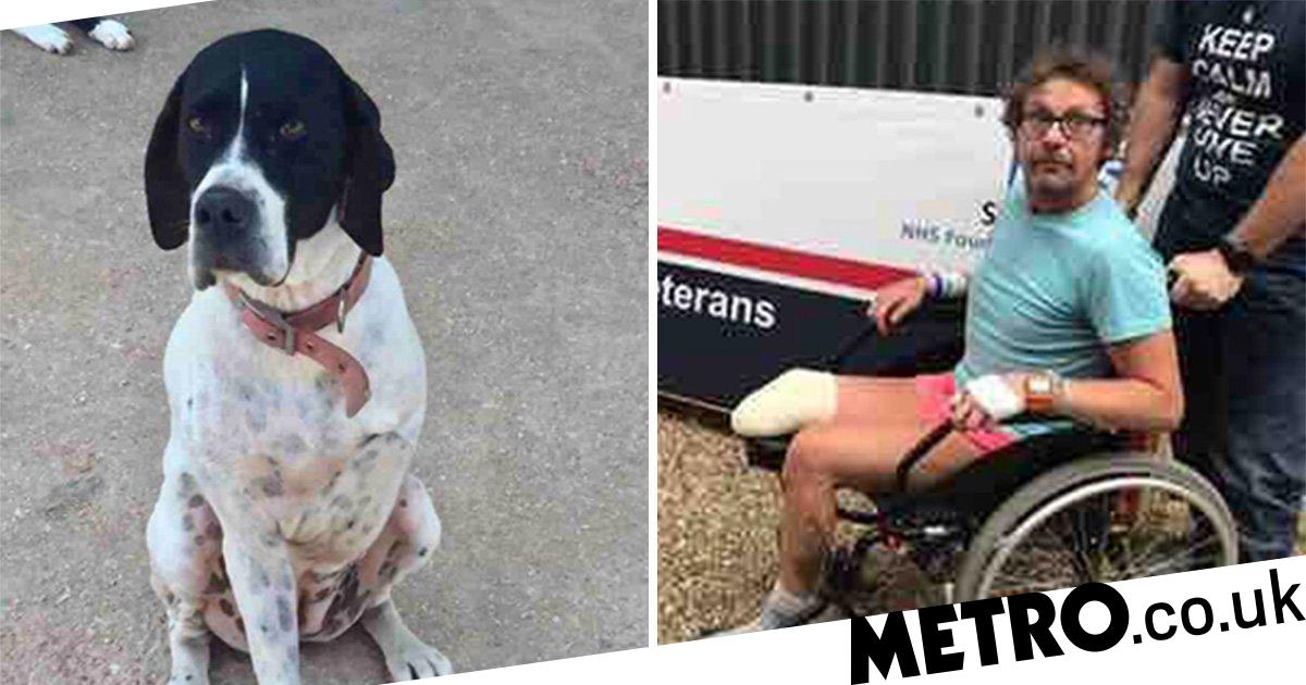 Three-legged dog who spent years in Turkish rescue shelter adopted by amputee