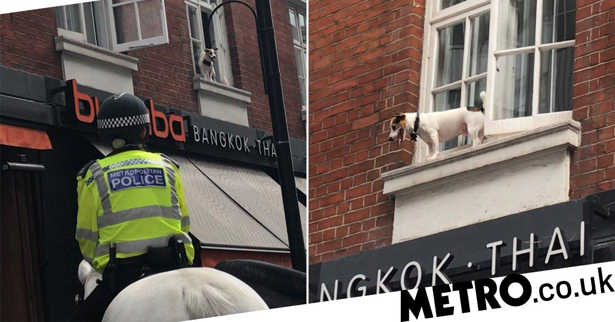 Terrified dog stuck on ledge above Soho restaurant