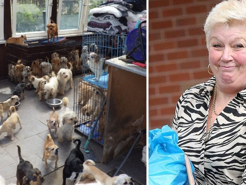 'Hoarder' who left 100 dogs to suffer in squalid home fined £50,000