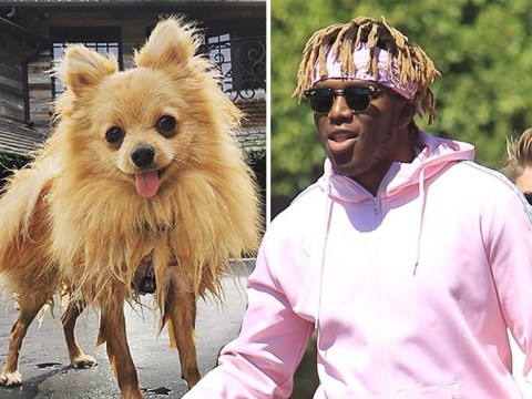 KSI throws shade at Logan Paul's dead dog Kong Da Savage ahead of boxing rematch