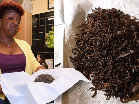 Gran's home invaded by thousands of millipedes