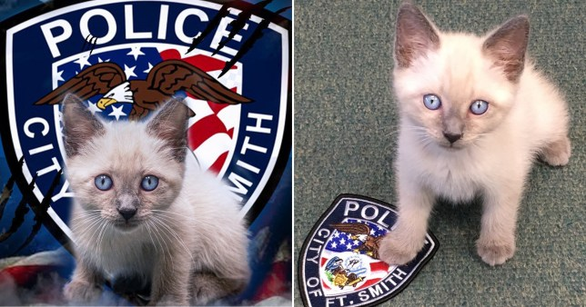Cat joins American police force and his blue eyes match their crest