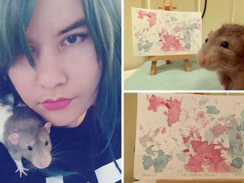 Rat who made brilliant paintings with his feet has died
