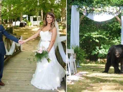 Black bear photobombs couple's wedding pictures